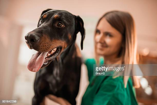 black doberman on a medical exam at vet's office. - doberman pinscher stock pictures, royalty-free photos & images