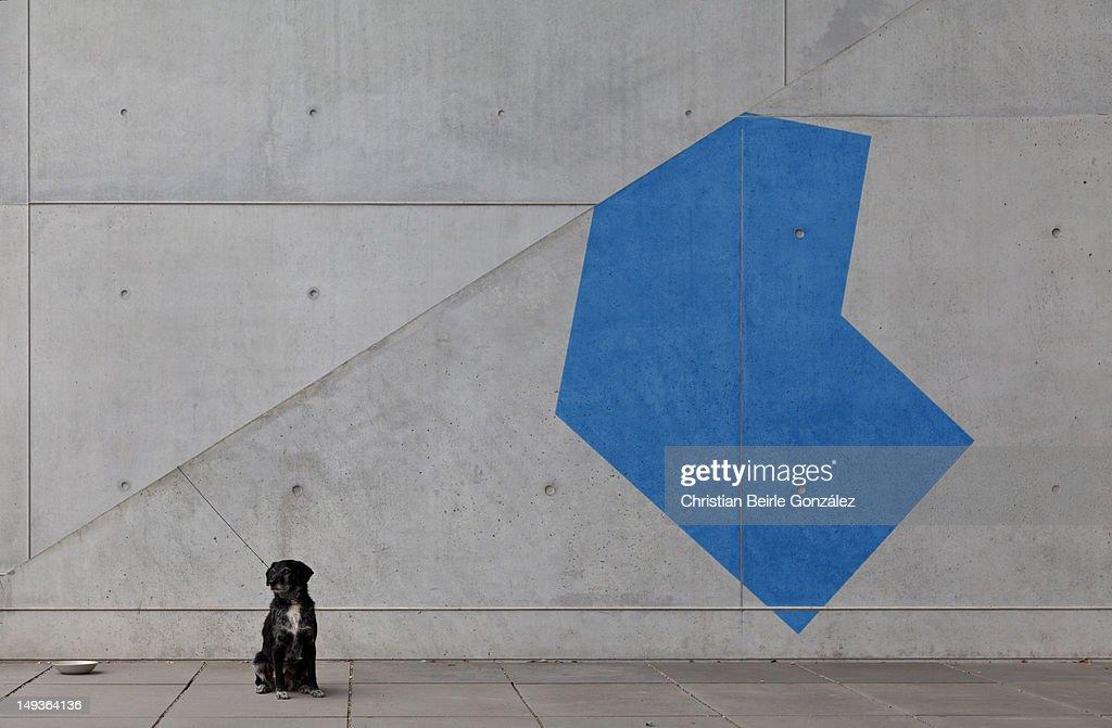 Black dog and blue shape : Stock-Foto