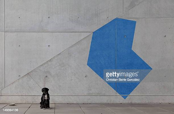 black dog and blue shape - christian beirle fotografías e imágenes de stock