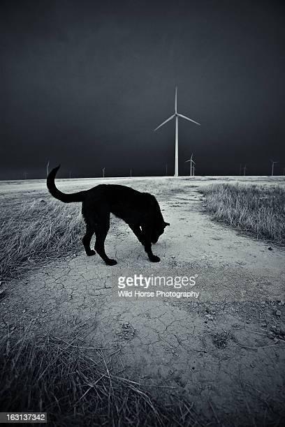 A black dog at wind farm