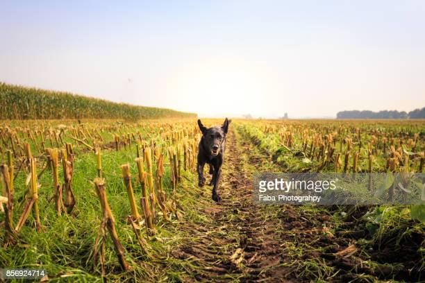 Black Dog Is Running