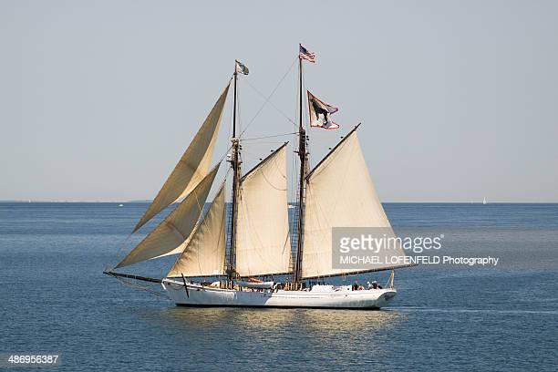 Black Dog Sail Boat of the coast of Martha's Vineyard