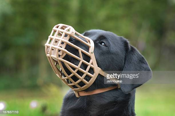 A black dog wearing a plastic muzzle outdoor