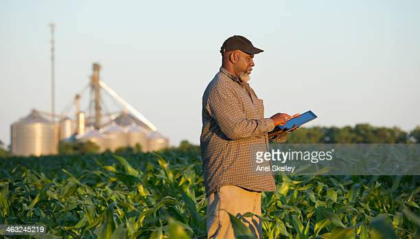 black farmer with digital tablet in crop field - crop plant stock pictures, royalty-free photos & images