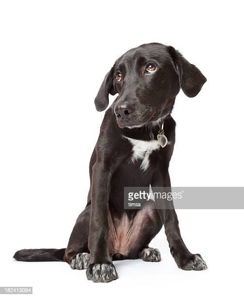 ブラックの子犬 hangdog 表情を知らぬ不法行為