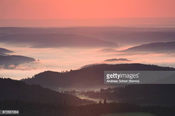 Black forest fog