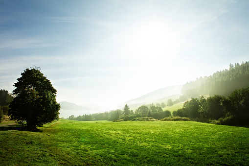 black forest landscape at the dawn, germany, copyspace 1022163060
