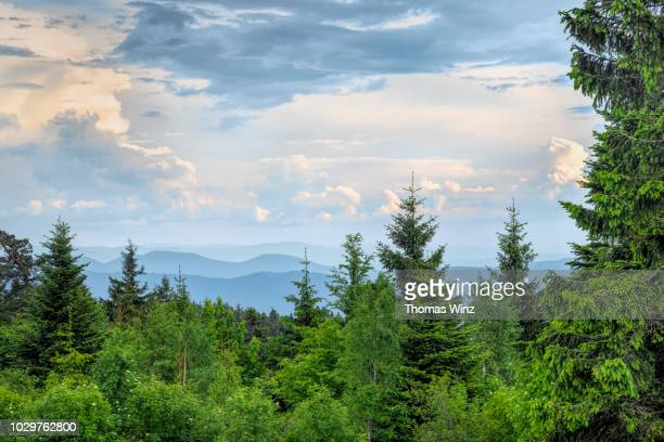 black forest landscape - nature stock pictures, royalty-free photos & images