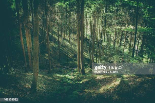 black forest - schwarzwald stock-fotos und bilder