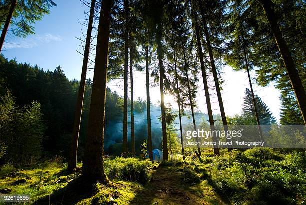 Black Forest with woodsmoke