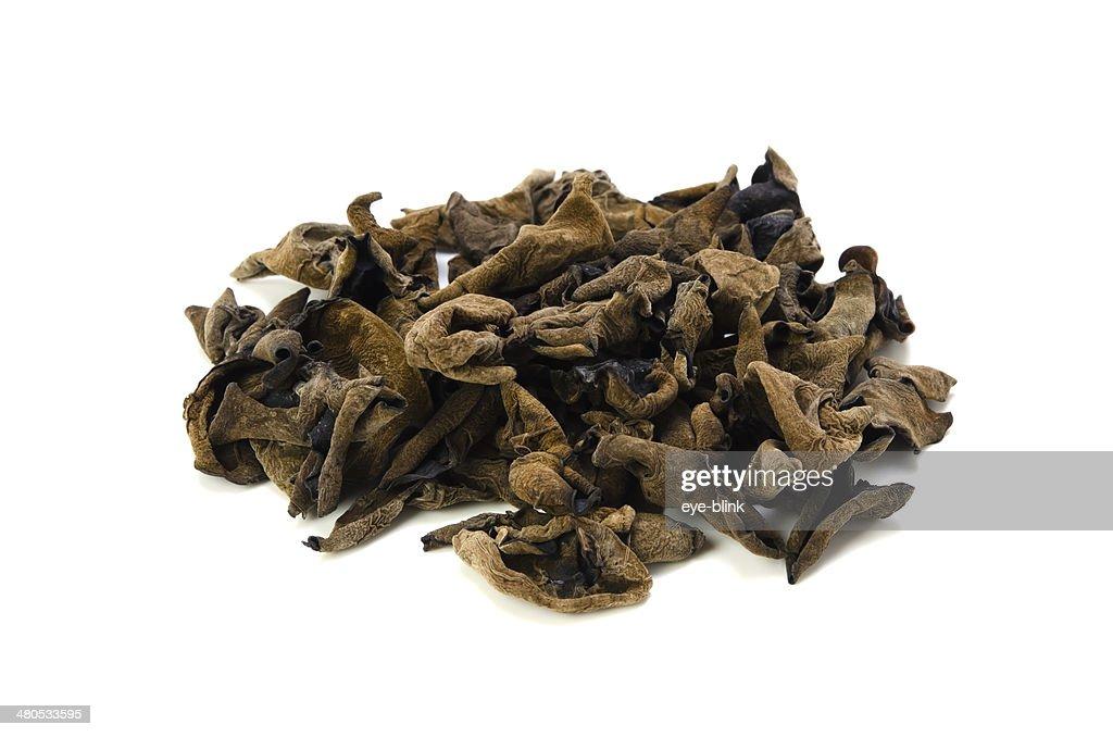 Black Fungus : Stock Photo