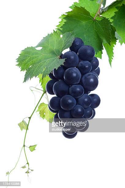ブラックのブドウ
