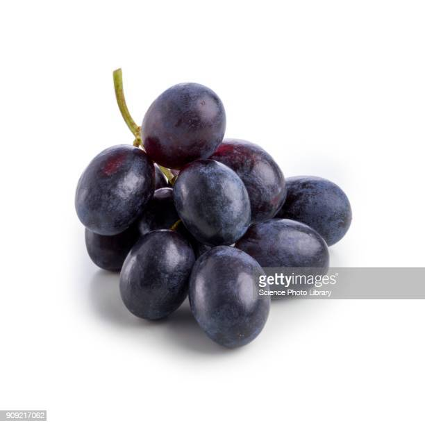 black grapes - druif stockfoto's en -beelden
