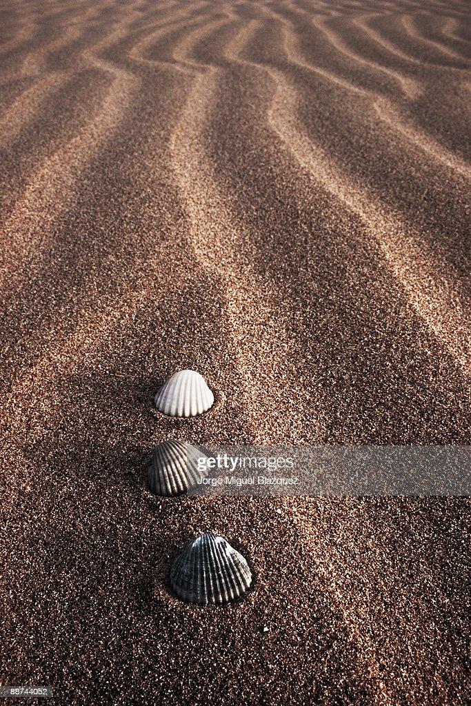 Black grey white shells on sand.  : Foto de stock