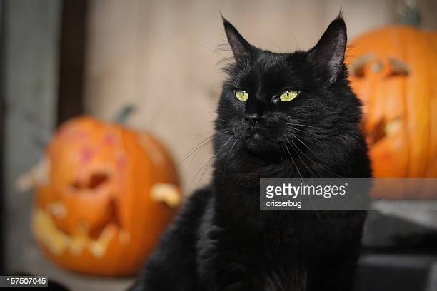 black halloween cat - halloween cats stock pictures, royalty-free photos & images