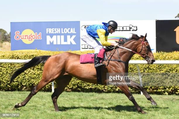Black Heart Bart gallops after Terang CoOp BM64 Handicap at Terang Racecourse on January 23 2018 in Terang Australia