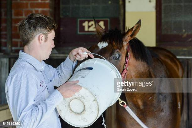 Black Heart Bart with strapper Tyson Kermond after winning the italktravel Futurity Stakes at Caulfield Racecourse on February 25 2017 in Caulfield...