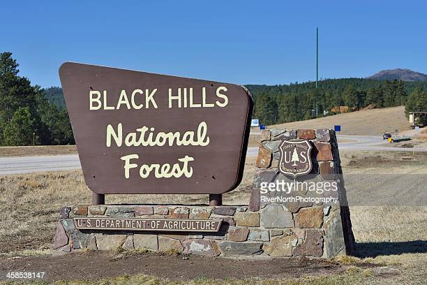 black hills national forest - black hills stock photos and pictures