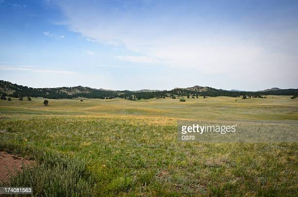 black hills, south dakota - black hills stock pictures, royalty-free photos & images