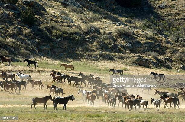 black hills wild horse sanctuary, hot springs, south dakota, united states of america, north america - black hills - fotografias e filmes do acervo