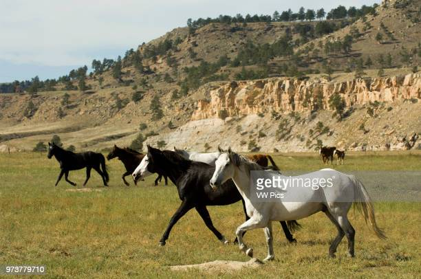 Black Hills Wild Horse Sanctuary, Hot Springs, South Dakota, USA.