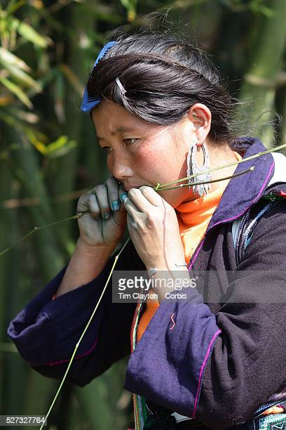 A Black Hmong guide eats from native forna near Sapa Northern Vietnam Sapa and the surrounding highlands are close to the Chinese border in Northern...