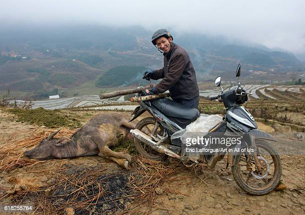 Black hmong man going to pull the buffalo he just killed with his motorbike sapa Vietnam on February 2 2011 in Sa Pa Vietnam