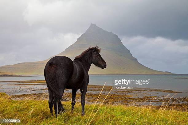Schwarzes Pferd in Island