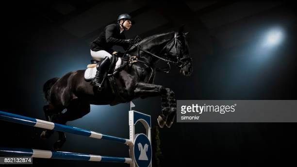 15 531 Black Horse Photos And Premium High Res Pictures Getty Images
