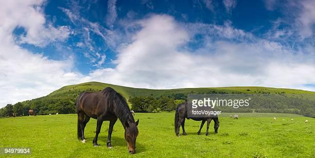 Black horses green pasture