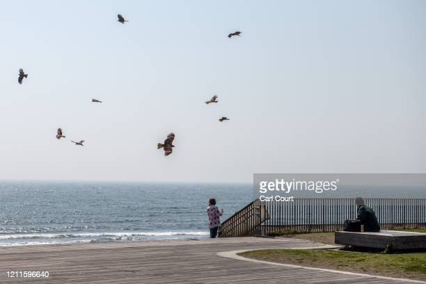 Black Kites fly overhead as people relax by the beach during the first weekend of the Golden Week national holiday on May 02 2020 in Enoshima Japan...