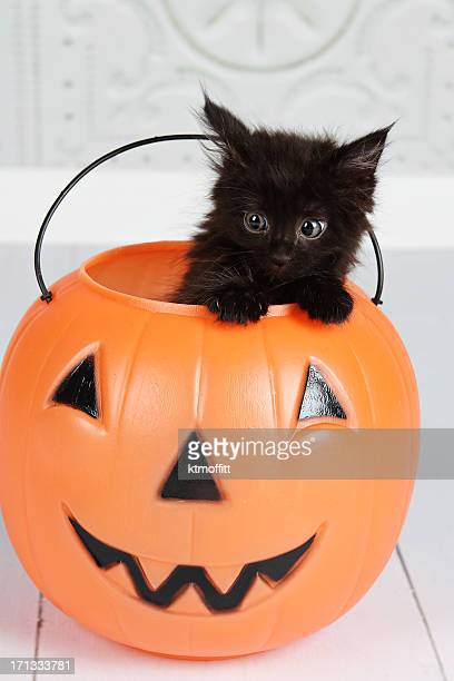black kitten in jack'o'lantern - halloween cats stock pictures, royalty-free photos & images