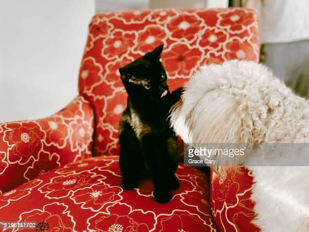 black kitten lands a paw on dog - pets stockfoto's en -beelden