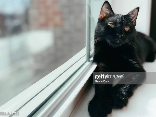 black kitten on window sill - cary stockfoto's en -beelden