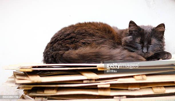black kitten - annfrau stock photos and pictures