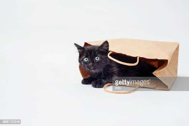 black kitten - bolsa preta - fotografias e filmes do acervo
