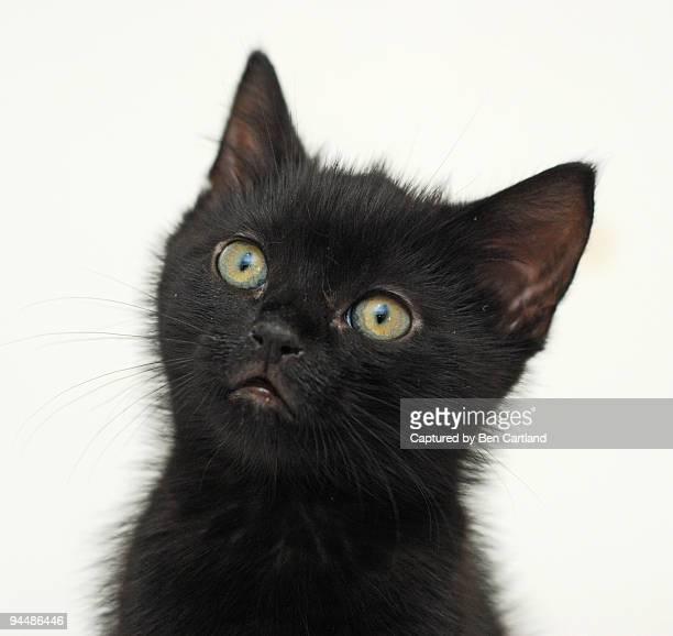 Black kitten portrait