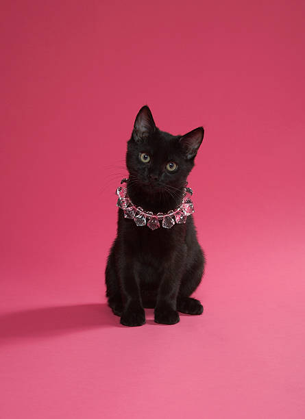 Black kitten wearing jewelled necklace, studio shot