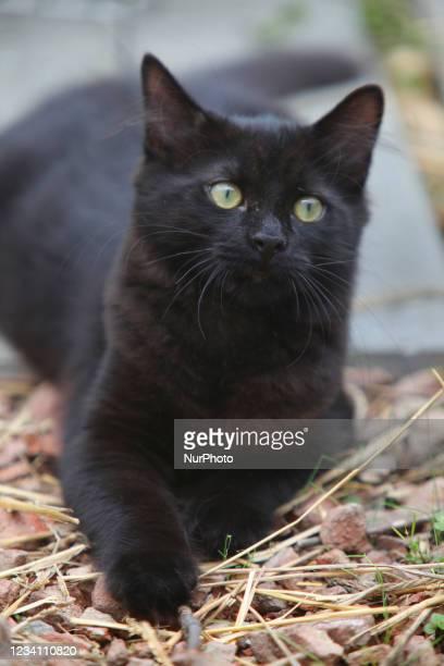 Black kitten with green eyes in Toronto, Ontario, Canada.