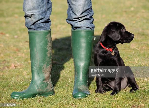 black labrador dog with wellington boots - ブーツイン ストックフォトと画像