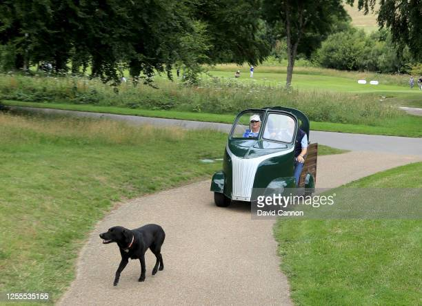 Black labrador walks ahead of it's owners and members of Goodwood driving one of the special golf buggies used at the club during the Clutch Pro Tour...