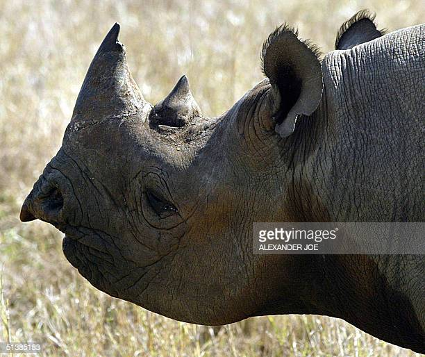 A black male rhinoceros is seen at a game farm in Malelane 30 September 2004 South Africa will ask the Convention of International Trade in...