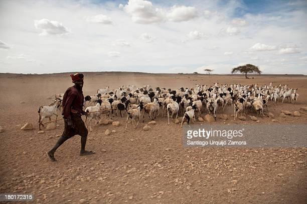 CONTENT] A black man belonging to the Gabbra tribe directing his herd of goats in search of food in the barren Chalbi Desert Marsabit County Kenya