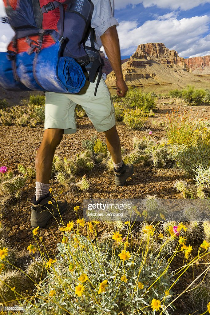 Black man hiking in canyon area : Stock Photo