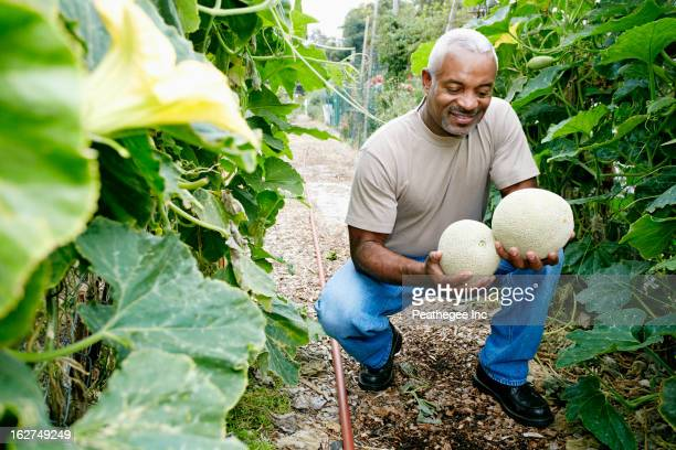 black man holding cantaloupe in community garden - muskmelon stock pictures, royalty-free photos & images