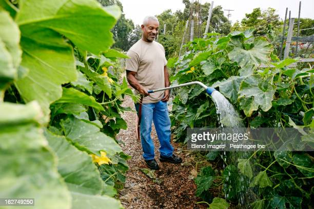 Black man watering plants in community garden