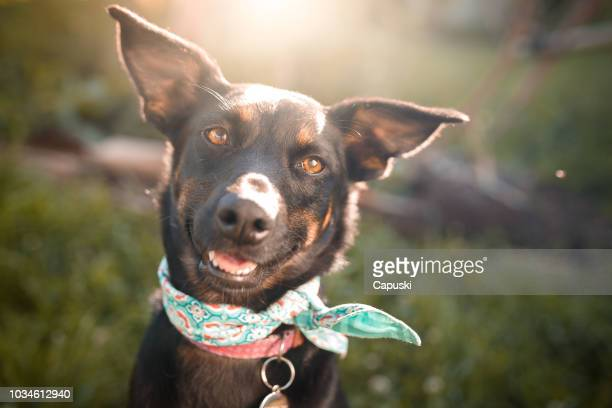 black mutt dog outdoor portrait - dog stock pictures, royalty-free photos & images