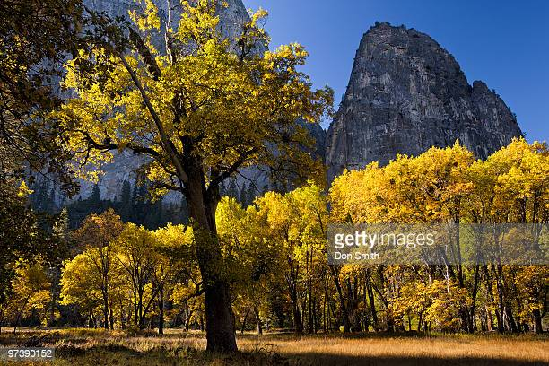 black oaks fall color - don smith stock pictures, royalty-free photos & images