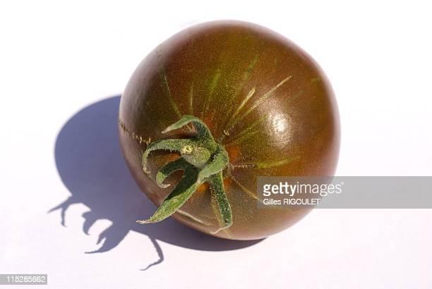 Black Prince tomato on August 2009 in Conservatory of Tomato, Castle de la Bourdaisiere, Montlouis sur Loire, France. Conservatory of Tomato Grows...