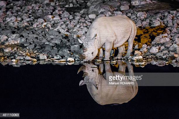 CONTENT] Black rhinoceros with reflection drinking at night at the Okaukuejo water hole in Etosha National Park Namibia